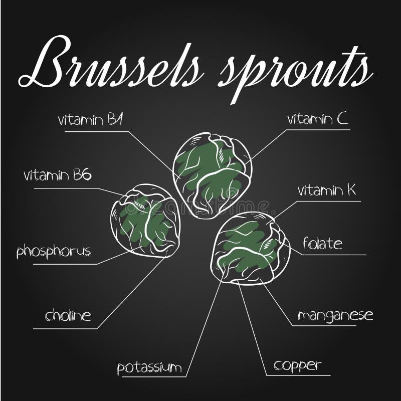Wektorowa ilustracja odżywki spisuje dla Brussels flanc na chalkboard tle ilustracji
