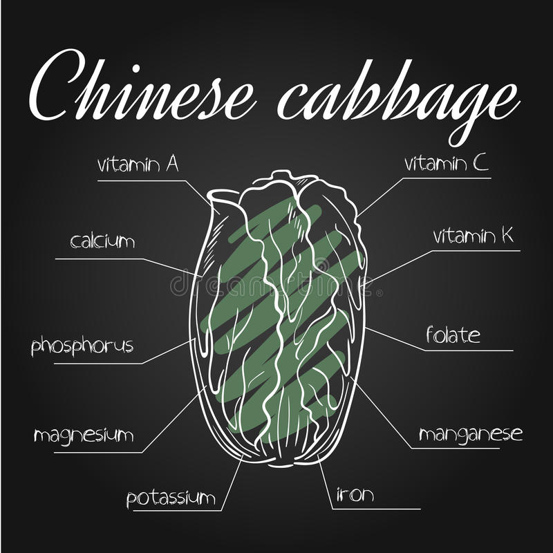 Wektorowa ilustracja odżywki spisuje dla chińskiej kapusty na chalkboard tle royalty ilustracja