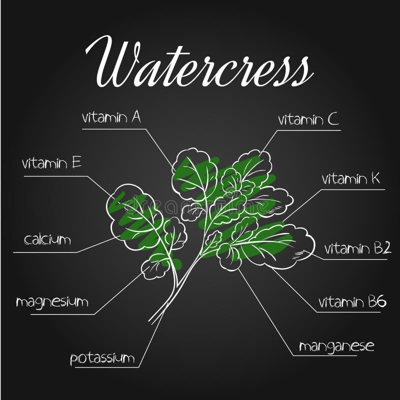 Wektorowa ilustracja odżywki spisuje dla watercress na chalkboard tle ilustracja wektor