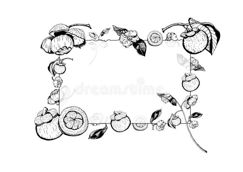 Wektorowa ilustracja przejrzysta szkło rama z mangostan owoc, kwiaty, liście Ręka rysująca w czarny i biały ilustracji