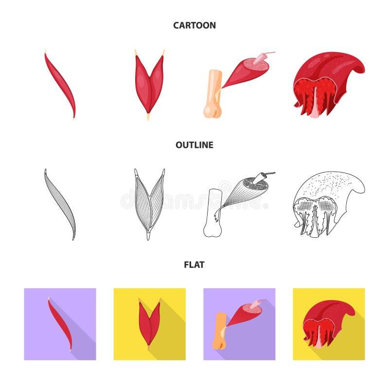 Wektorowa ilustracja włókno i mięśniowy symbol Set włókna i ciała akcyjna wektorowa ilustracja ilustracji