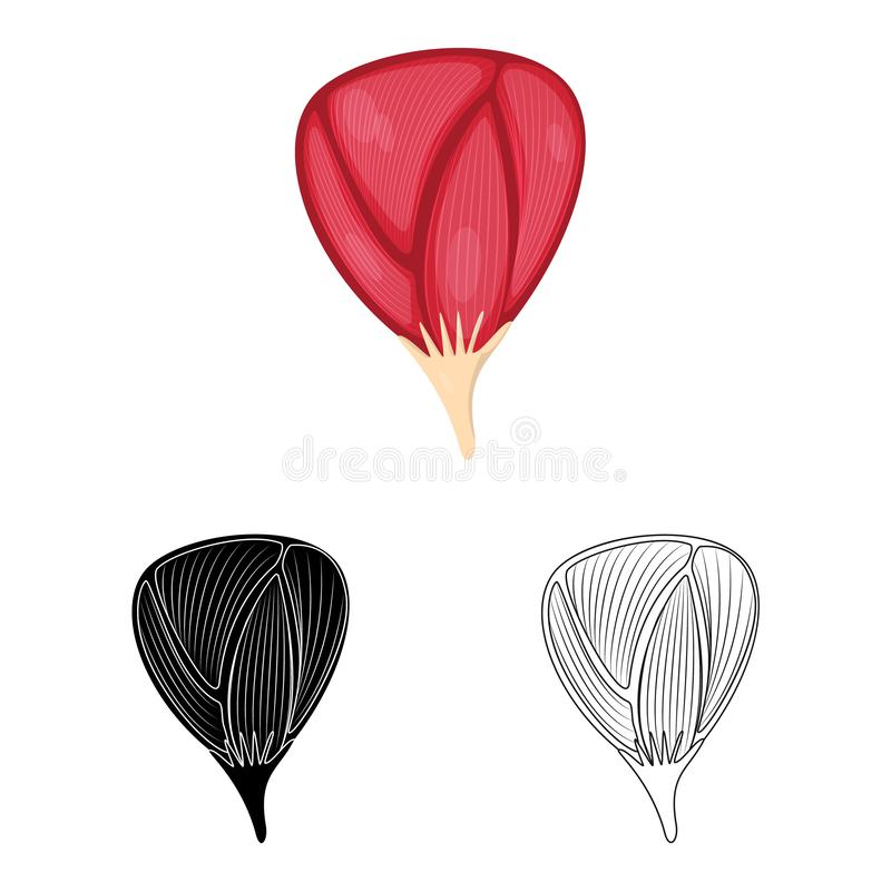 Wektorowa ilustracja włókno i mięśniowy symbol Set włókna i ciała akcyjny symbol dla sieci ilustracji
