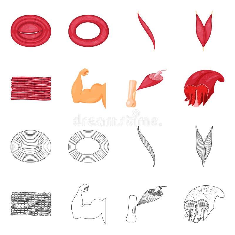Wektorowa ilustracja włókno i mięśniowy znak Set włókna i ciała akcyjny symbol dla sieci ilustracja wektor