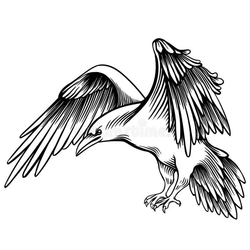 Wektorowa ilustracja wrona Kreślący Mały kruk ilustracja wektor
