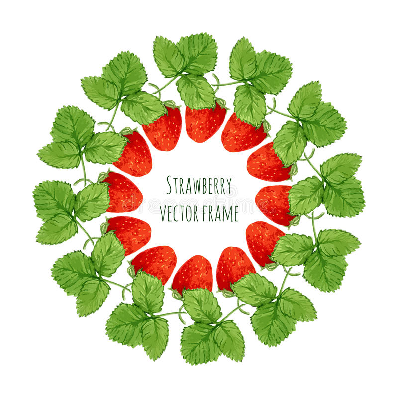 Wektorowa ilustracja z akwareli truskawki ramą Ręka rysująca jagoda dla rolników wprowadzać na rynek, ziołowa herbata, eco produk ilustracji
