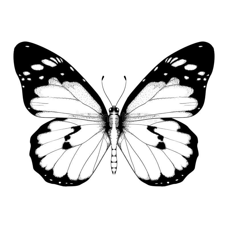 Wektorowa ilustracja z czarny i biały motylem ilustracji