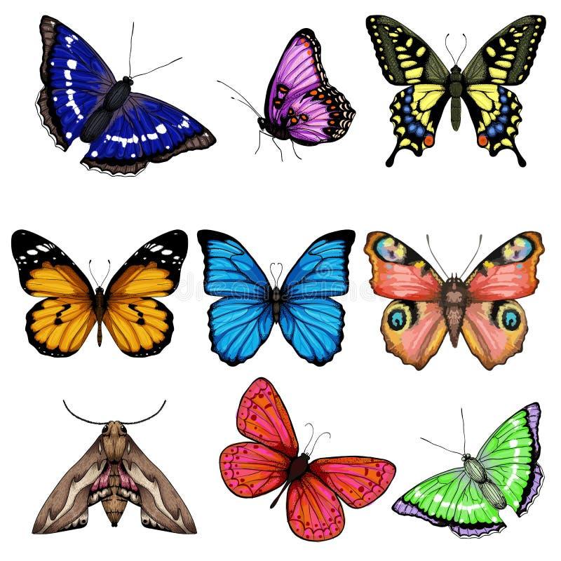 Wektorowa ilustracja z dużą kolekcją motyle ilustracji