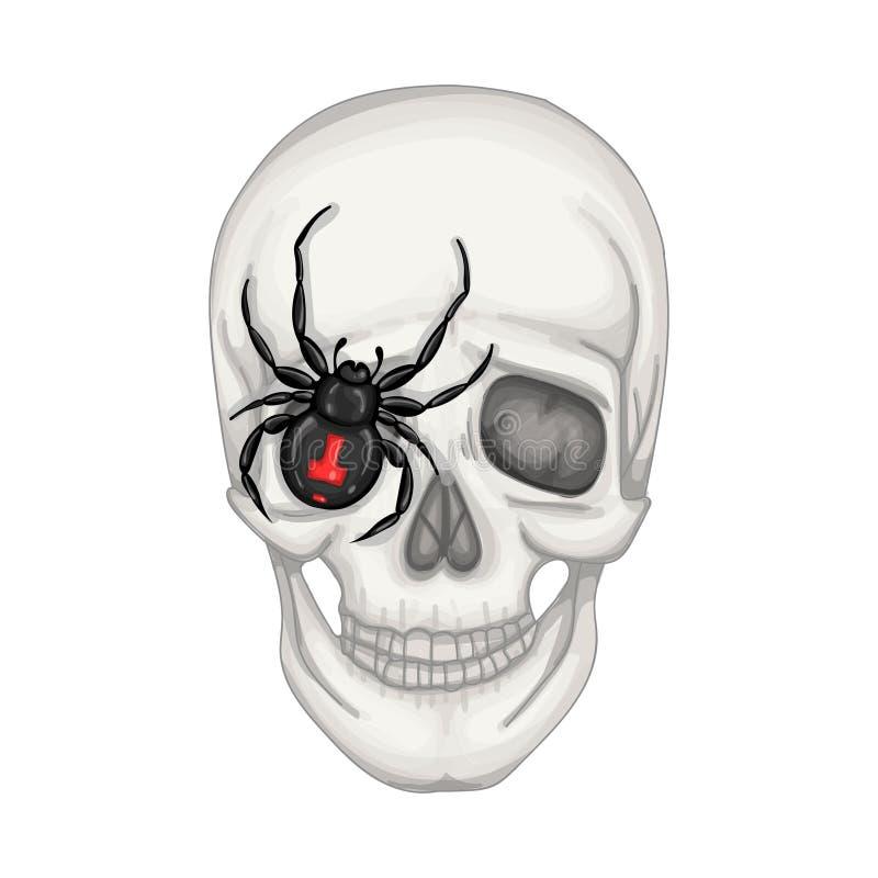 Wektorowa ilustracja z ludzką czaszką i pająk czernimy royalty ilustracja