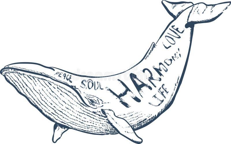 Wektorowa ilustracja z wielorybem, nautyczna ręka rysujący literowanie, fotografia royalty free