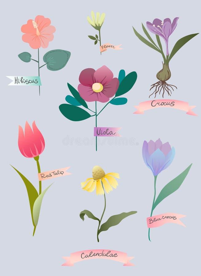 Wektorowa ilustracja z wiosna kwiatami ilustracji