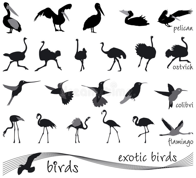Wektorowa kolekcja sylwetki egzotyczni ptaki royalty ilustracja