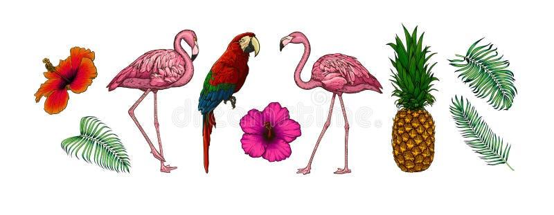 Wektorowa kolekcja tropikalni li?cie, kwiaty, ptaki i owoc odizolowywaj?cy na bia?ym tle, Egzotyczne ilustracje dla a ilustracja wektor