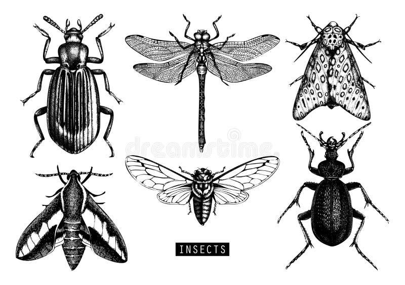 Wektorowa kolekcja wysokości wyszczególniający insektów nakreślenia Wręcza patroszonych motyle, ścigi, dragonfly, cykada, bumbleb ilustracja wektor