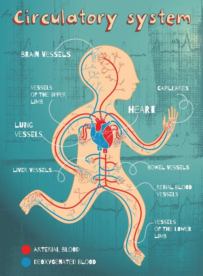 Wektorowa kreskówki ilustracja ludzki krążeniowy system dla dzieciaków ilustracji