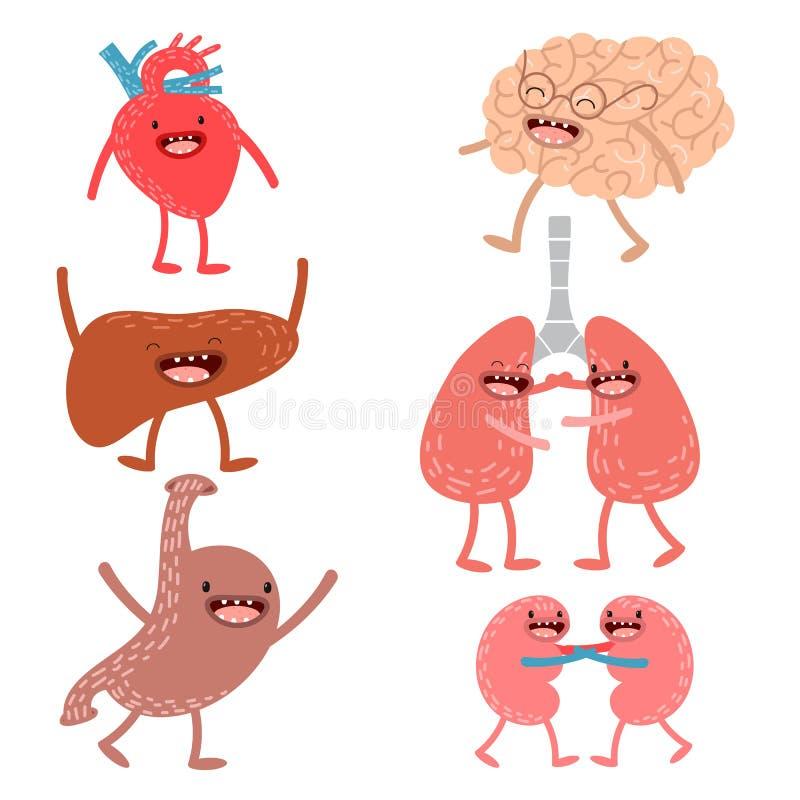 Wektorowa kreskówki istoty ludzkiej anatomia Set zdrowa wątróbka, serce ilustracja wektor