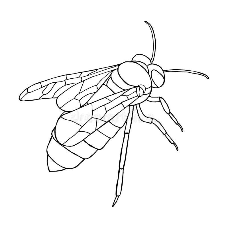 Wektorowa miodowa pszczoły ikona na białym tle royalty ilustracja
