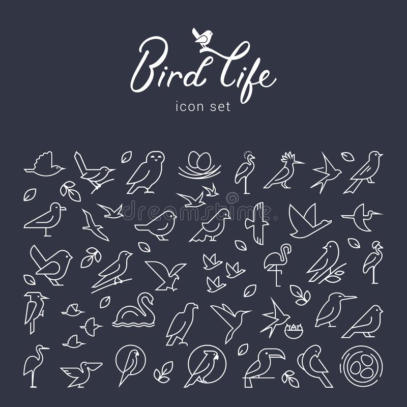Wektorowa płaska ptak ikona ustawiająca w cienkim kreskowym stylu Prosty minimalistic ptasi logo Ptaki ikona, zwierzę znak, symbo ilustracji