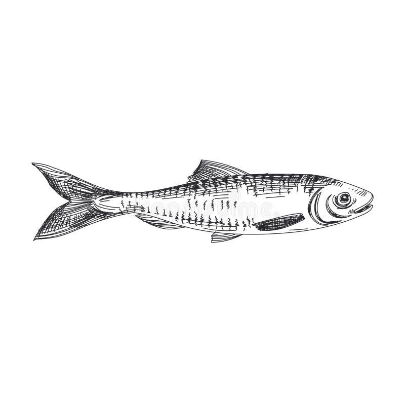 Wektorowa ręka rysująca lawendy ryby ilustracja ilustracja wektor