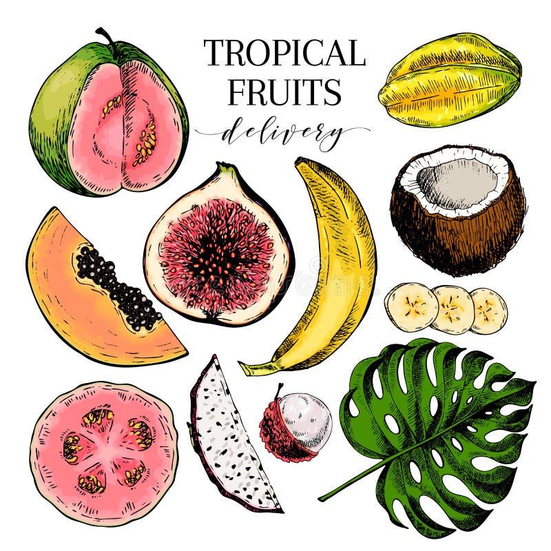 Wektorowa ręka rysować egzotyczne owoc Grawerujący smoothie pucharu składniki kolorowy ikona zestaw Tropikalny słodki jedzenie Ca ilustracja wektor