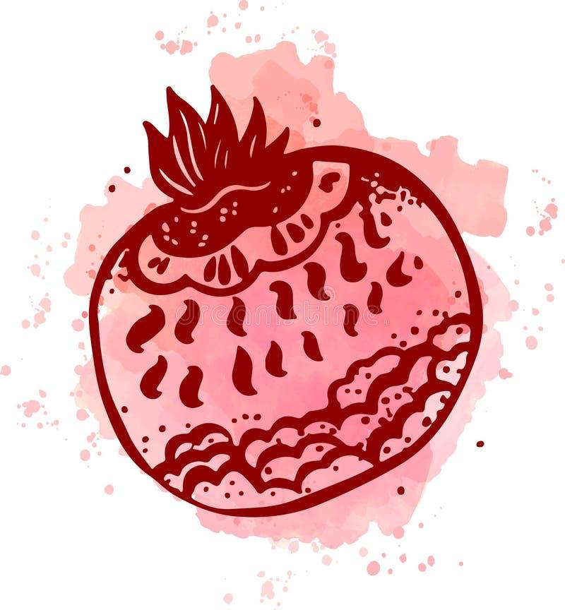 Wektorowa ręka rysujący akwarela obrazu owoc garnet ilustracja wektor