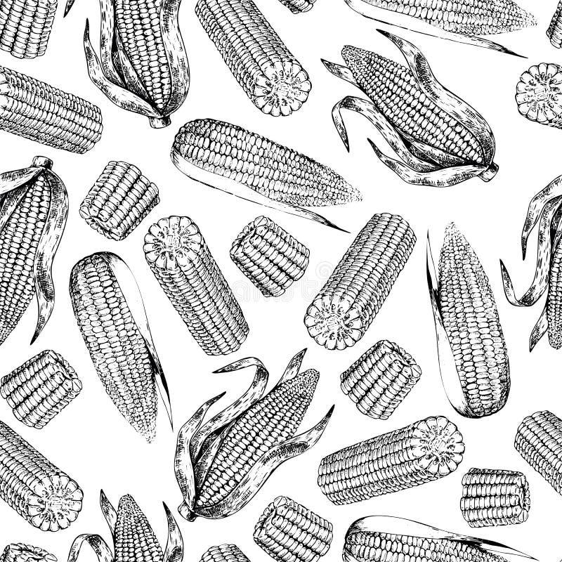 Wektorowa ręka rysujący bezszwowy wzór kukurydzani cobs Rolni warzywa Grawerująca sztuka Organicznie kreślący przedmioty ilustracji