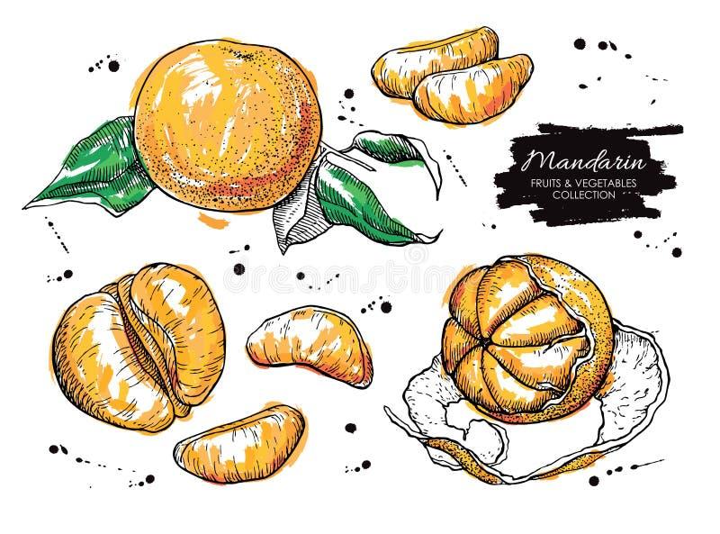 Wektorowa ręka rysujący mandarynka set Artystyczna kolekcja ilustracji