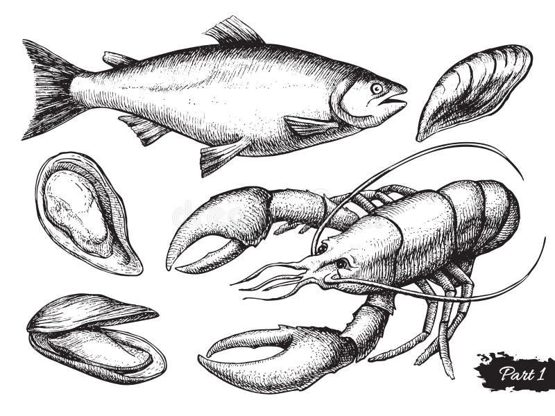 Wektorowa ręka rysujący owoce morza set ptaka rocznik śliczny ilustracyjny ustalony ilustracji
