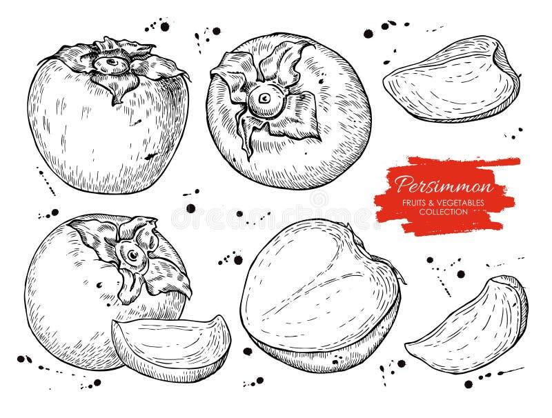 Wektorowa ręka rysujący persimmon set ilustracja wektor