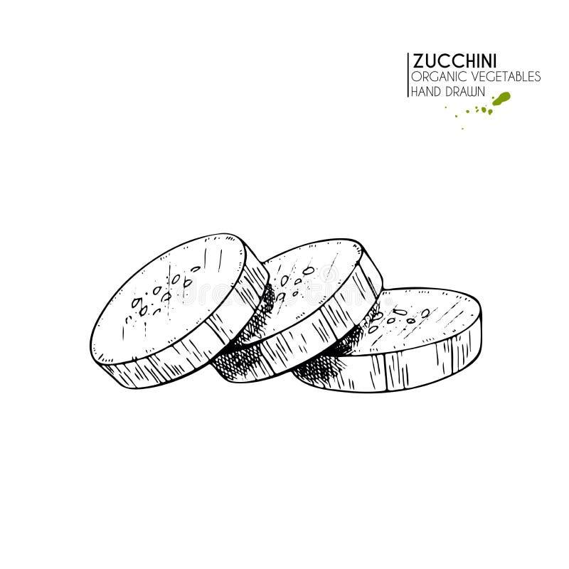 Wektorowa ręka rysujący set rolni warzywa Odosobniony pokrojony zucchini Grawerująca sztuka Organicznie kreślący jaroszy przedmio ilustracja wektor