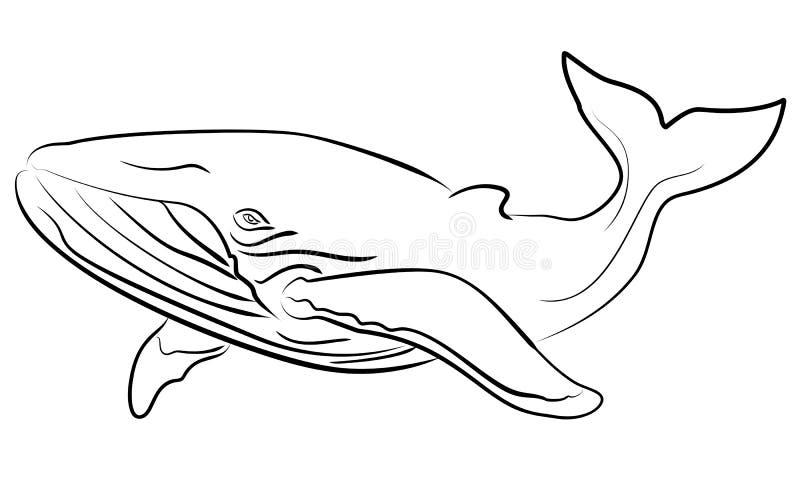 Wektorowa ręka rysujący szkicowy ilustracyjny wieloryb ilustracji