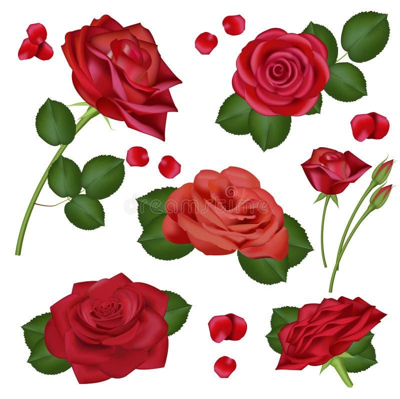 Wektorowa realistyczna czerwieni róża kwitnie na białym tle dla projekta, sztandary, zaproszenie ślub, urodziny ilustracja wektor