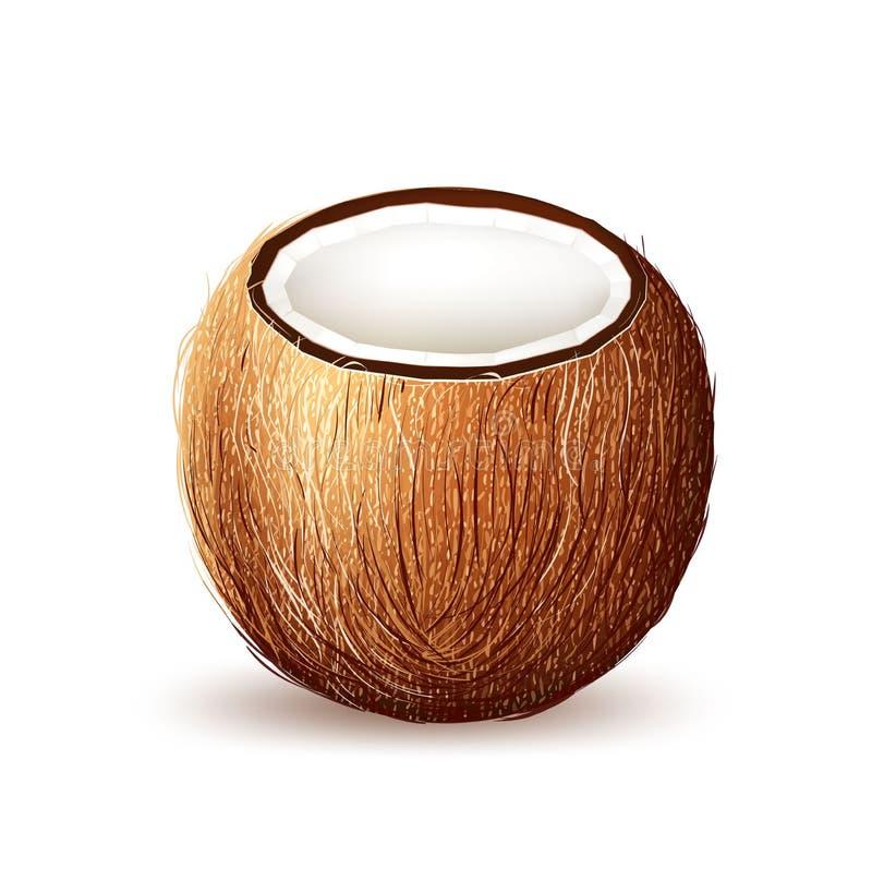 Wektorowa realistyczna kokosowa egzotyczna owoc 3d royalty ilustracja