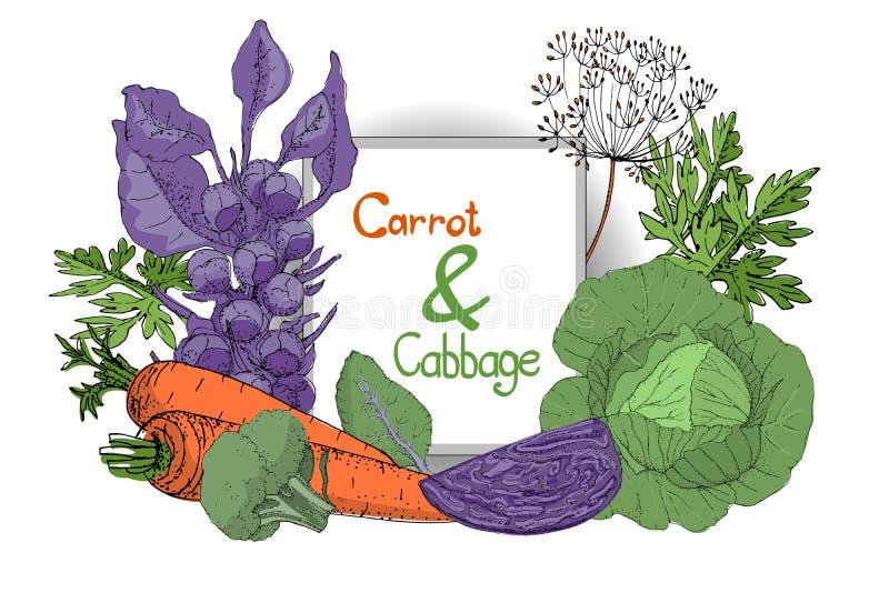 Wektorowa roślina ustawia z świeżą kapustą i marchewką ilustracja wektor
