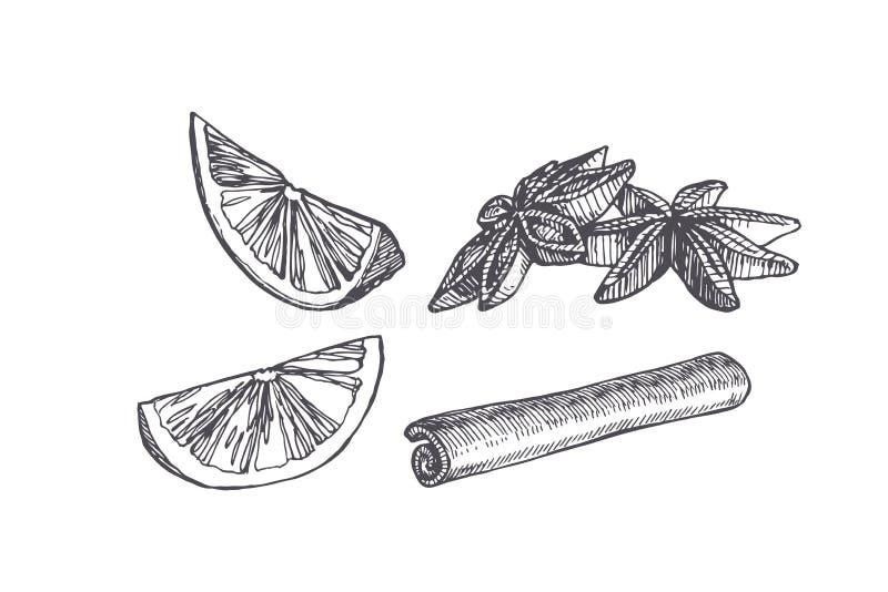 Wektorowa rocznik ilustracja kardamonu, cynamonu i cytrusa plasterek odizolowywający na bielu, Pikantność w nakreślenie stylu ilustracji
