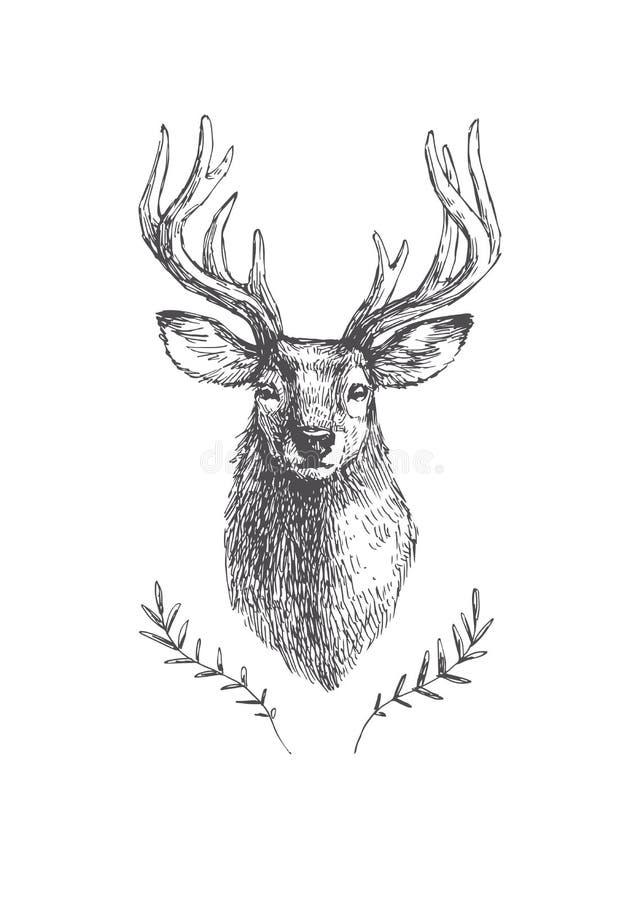 Wektorowa rocznika rogacza głowa w rytownictwo stylu Ręka rysujący illustra ilustracja wektor