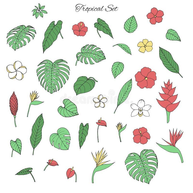 Wektorowa tropikalna kolekcja z monstera i bananowymi liśćmi, hibi royalty ilustracja