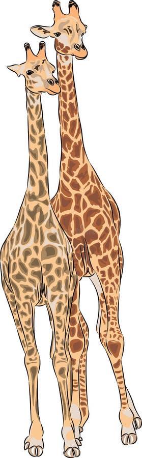 Wektorowe żyrafy royalty ilustracja