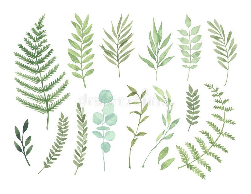Wektorowe akwareli ilustracje Botaniczny clipart Set zieleń ilustracja wektor