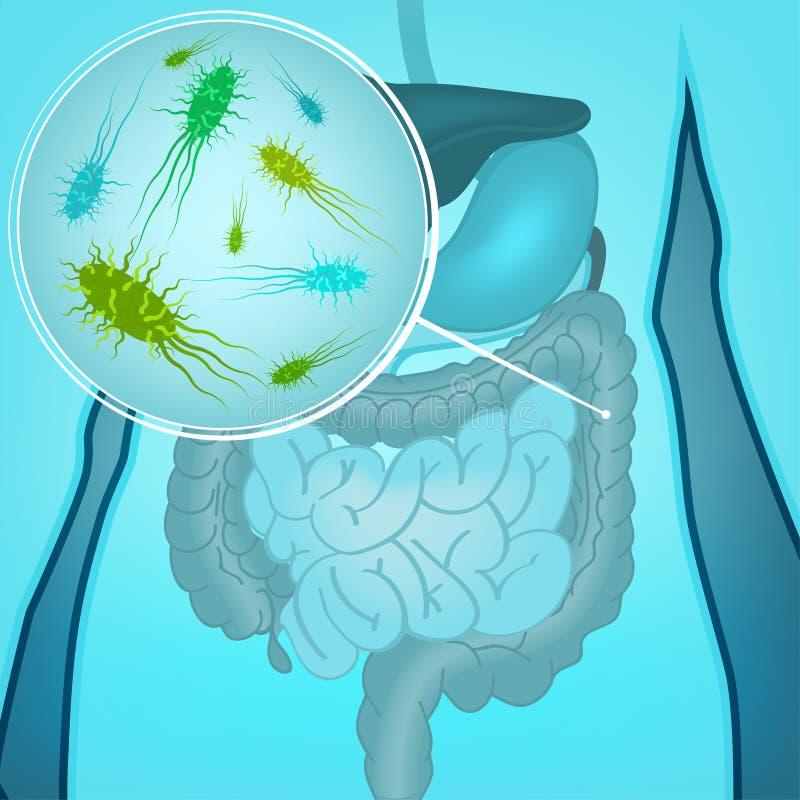 Wektorowe bakterii flory royalty ilustracja