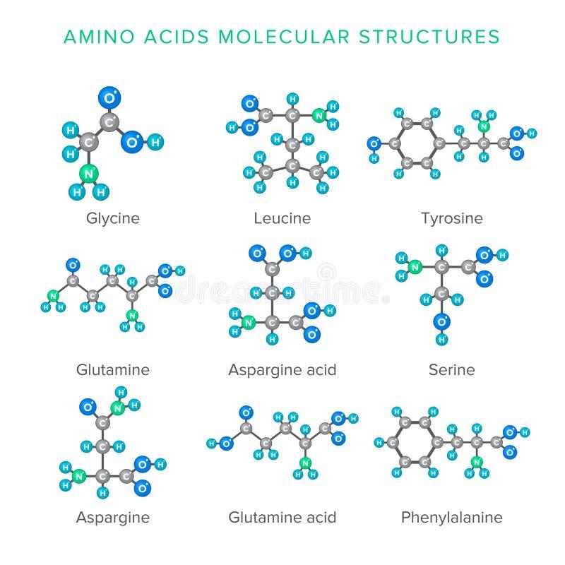 Wektorowe cząsteczkowe struktury amino kwasy odizolowywający na bielu secie ilustracja wektor
