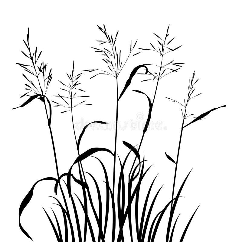 Wektorowe dzikie zboże rośliny ilustracji