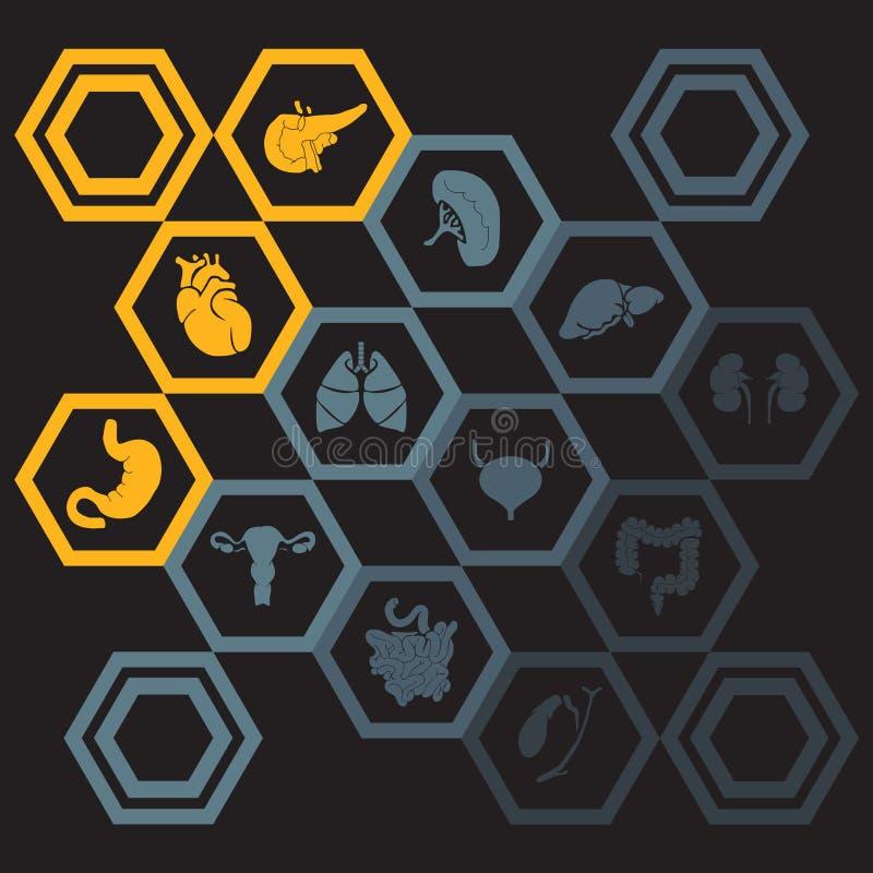 Wektorowe ikony ustawiać wewnętrzni ludzcy organy ilustracji