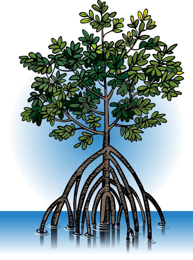Wektorowe mangrowe rośliny royalty ilustracja
