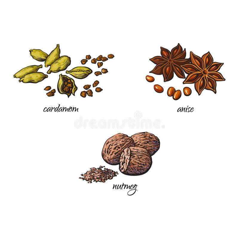 Wektorowe płaskie nakreślenie pikantność, condiments ziele ustawiający ilustracja wektor