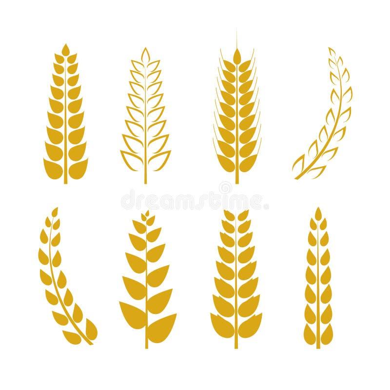 Wektorowe Pszeniczne ikony Ustawiać, Złoty Pszeniczny ucho tło, loga szablon royalty ilustracja