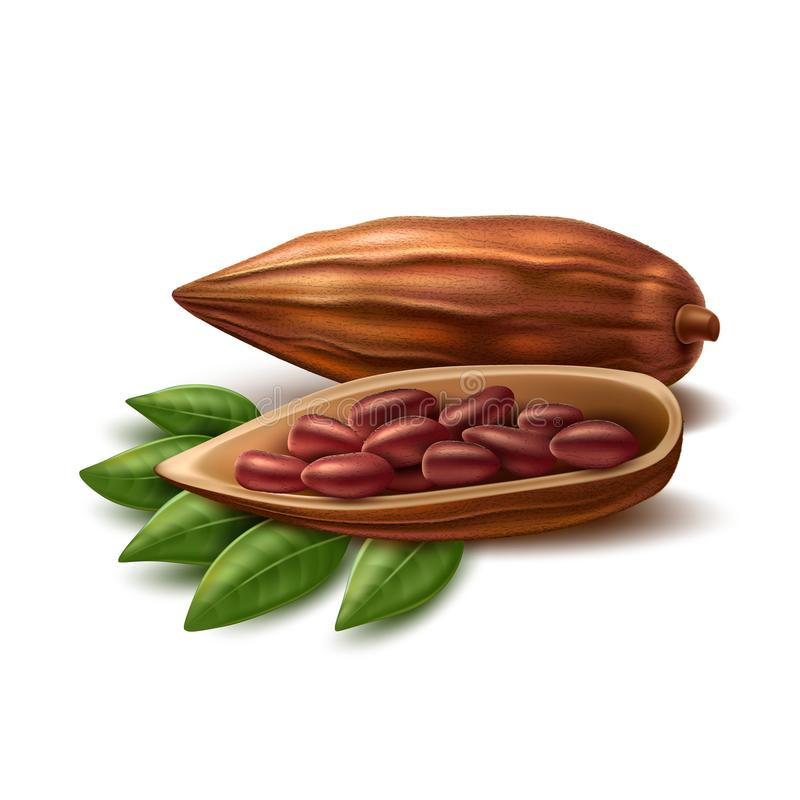 Wektorowe realistyczne kakaowe fasole royalty ilustracja