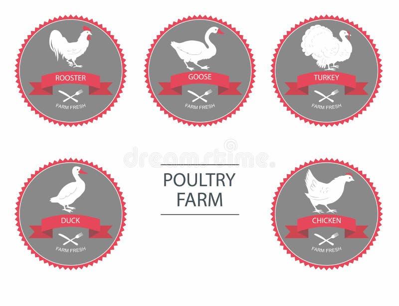 Wektorowe sylwetki kurczak, kogut, gąska, indyk, kaczka etykietka szablony z rolnymi ptakami royalty ilustracja