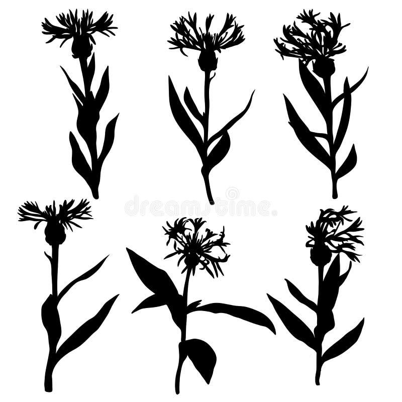 Wektorowe sylwetki rysunkowi cornflowers ilustracja wektor