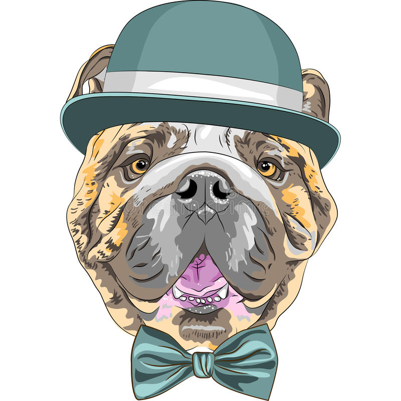 Wektorowego śmiesznego kreskówka modnisia psa buldoga Angielski traken ilustracja wektor