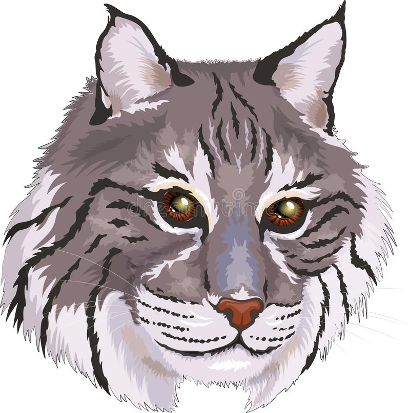 Wektorowego ilustracyjnego szarego rysia rudego duży kot W kreskówka stylu ilustracji